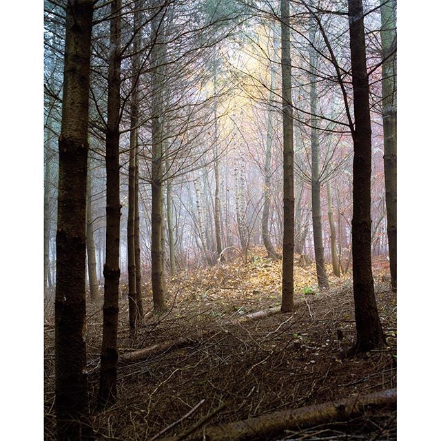 """From the series """"DIE LICHTUNG"""" at Steigerwald in Erfurt, GermanySee more: https://paulrubenmundthal.de/landscape-cityscape/#forest #Steigerwald #erfurt #wald #romantic #spring #colorful #artphotography #fineart #likepainting"""